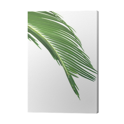 Palm print green plants white background png. Leaves of tree isolated