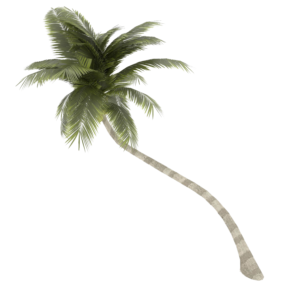 Palm tree background png. Coconut images transparent free