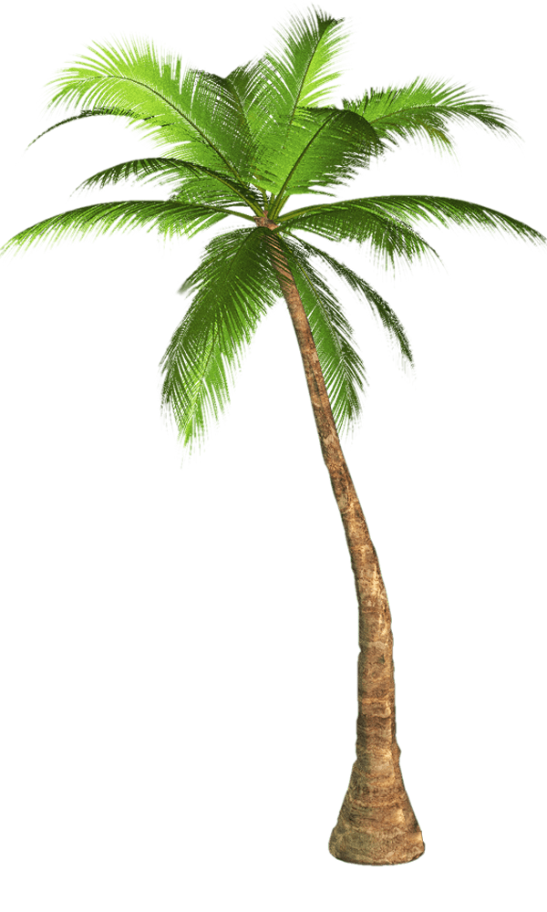 Palm leaf transparent png. Tree background image