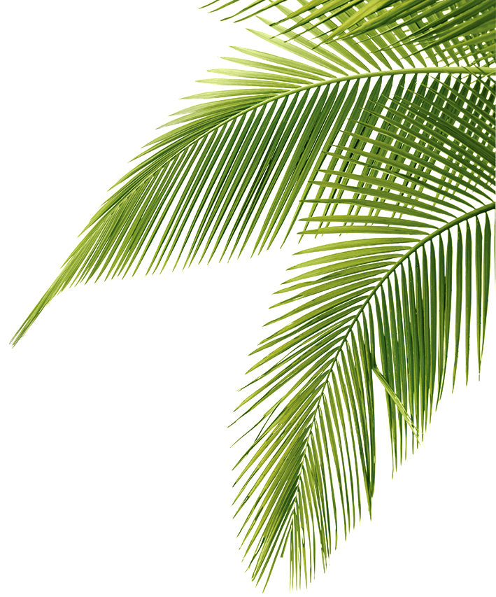 Palm tree background png. Leaf free icons and