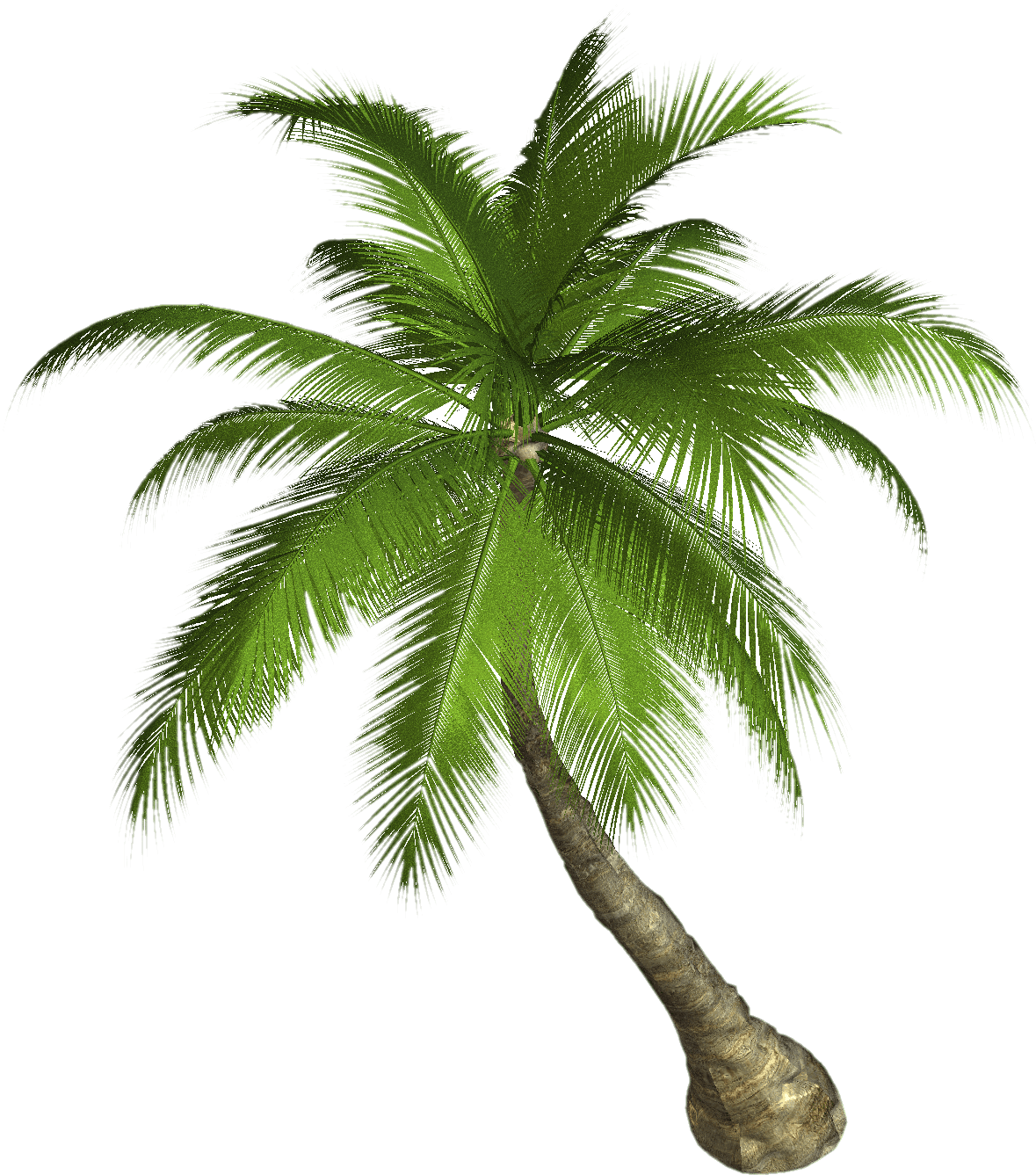 Palm tree background png. Transparent stickpng