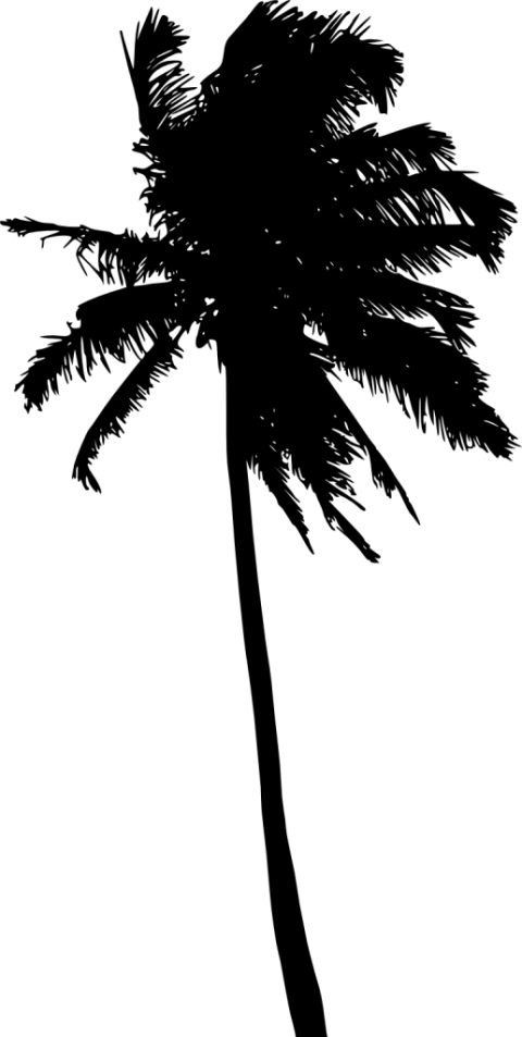 Palm tree black and white png. Silhouette free images toppng