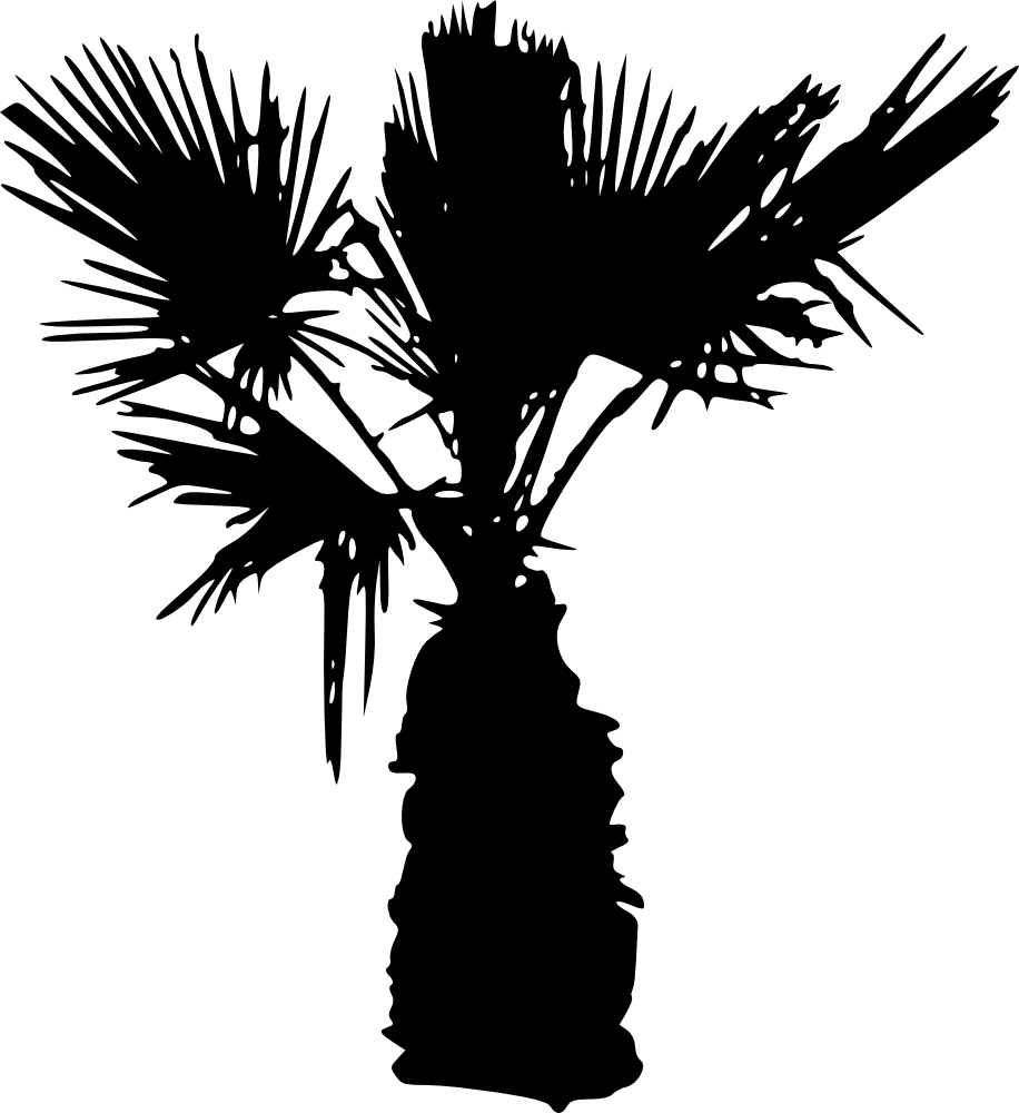 Palm tree black png. Silhouettes transparent background