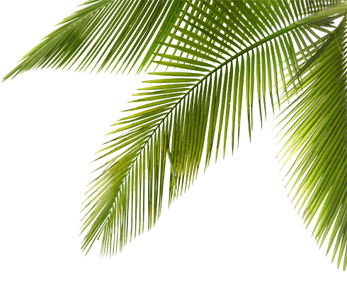 Palm tree branch png. Peter pan resort koh