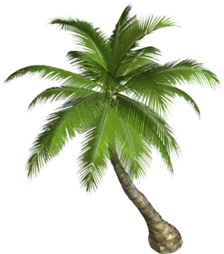 Palm tree branch png. Pin by b henderson
