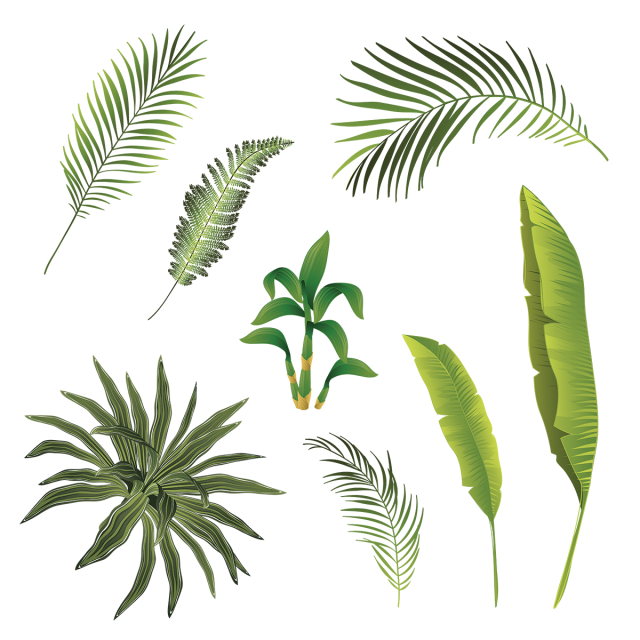 Hojas vector. Tropical branch and leaves