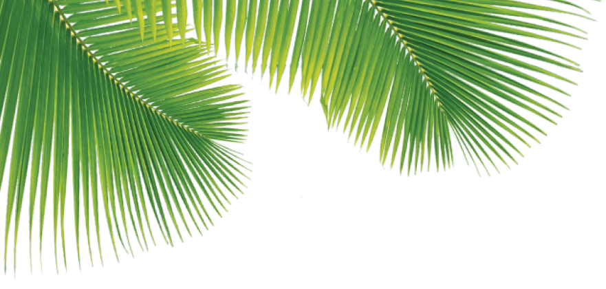 Palm tree leaf png. Images in collection page