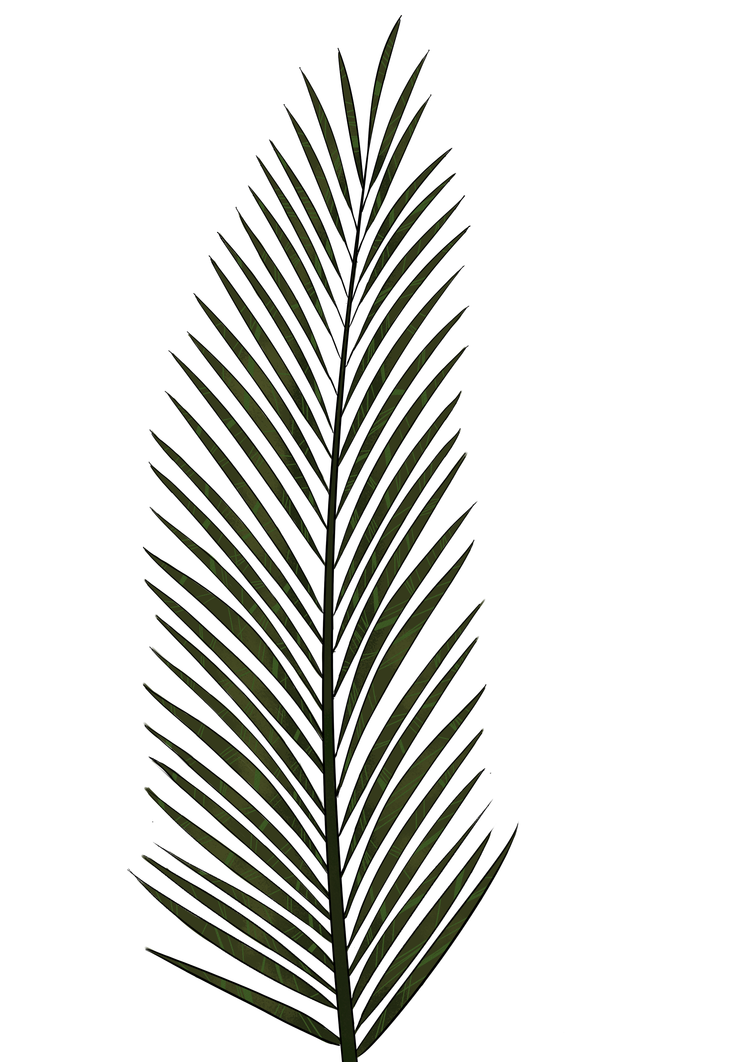 Palm tree leaf png. Drawing at getdrawings com