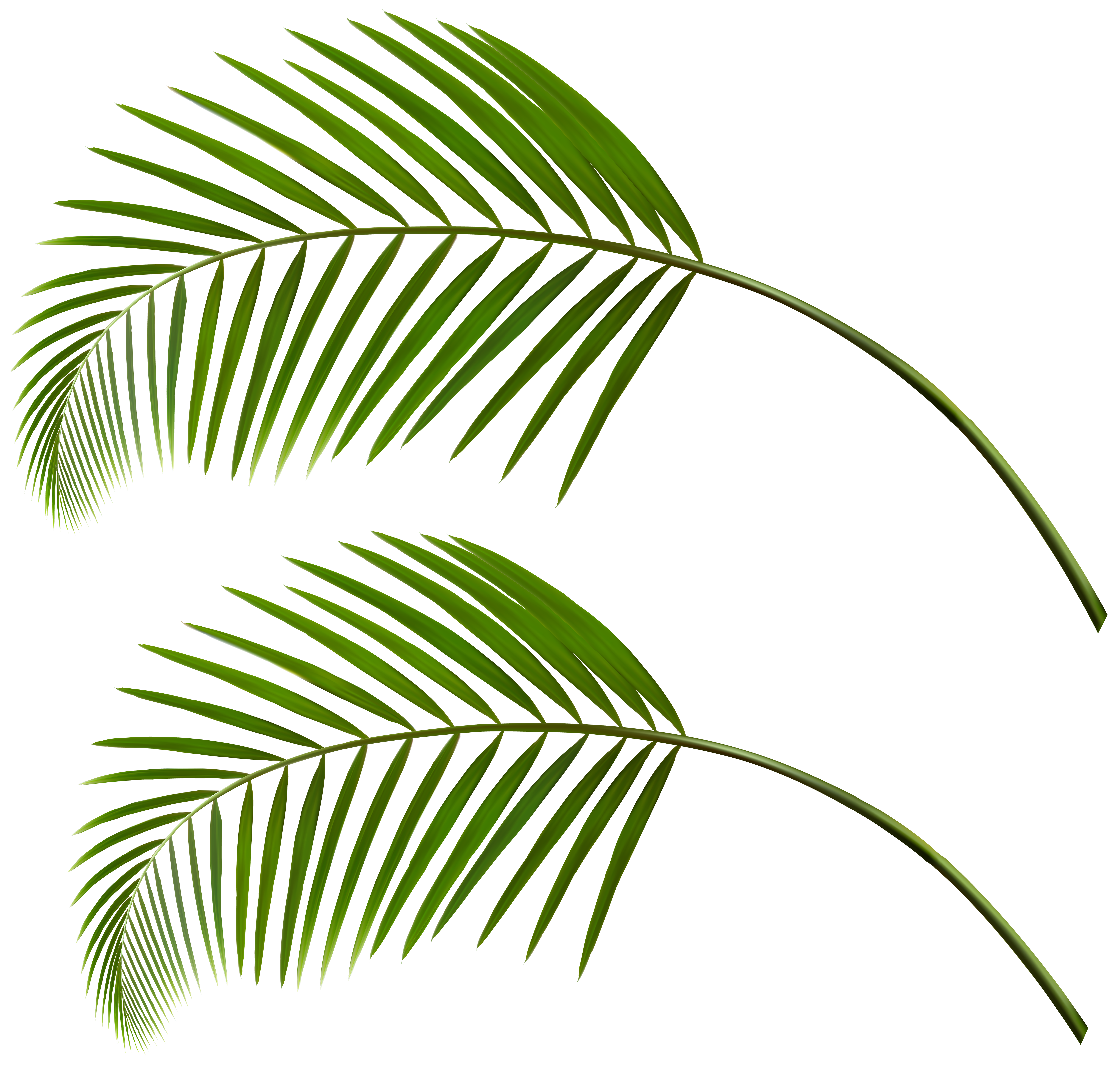 Palm tree leaf png. Leaves clip art gallery