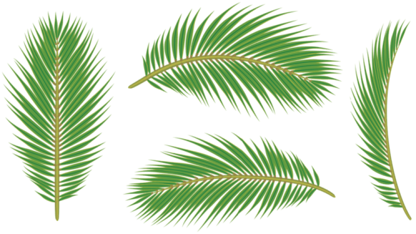 Palm leaves png png