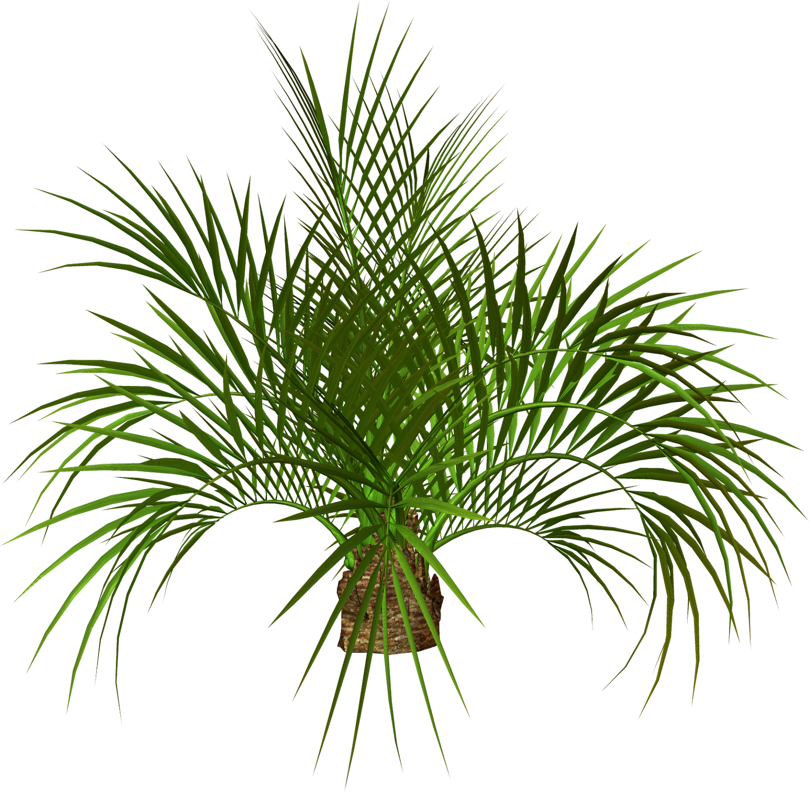 Palm frawn png. Tree transparent images free