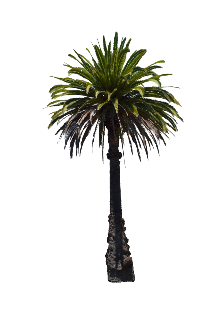 Palm tree photoshop png. Stock photo by annamae