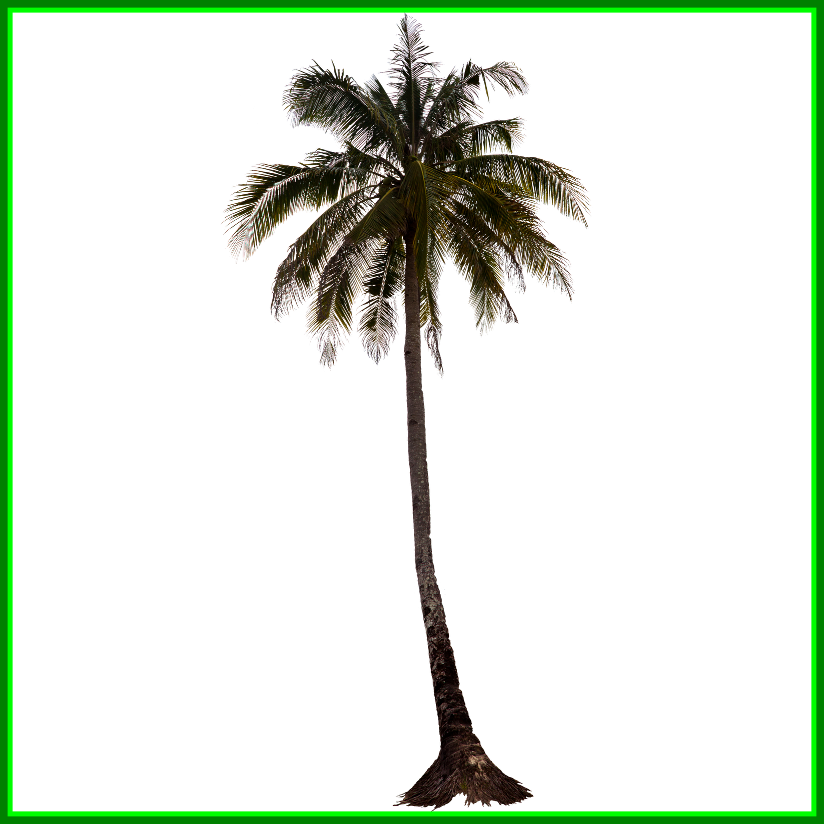 Palm tree photoshop png. Appealing image result for