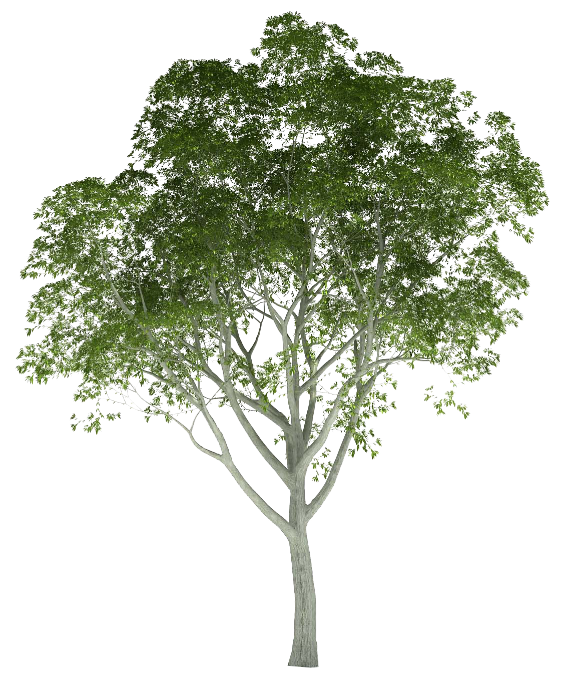 Photoshop png trees. Cutout tree pinterest ps
