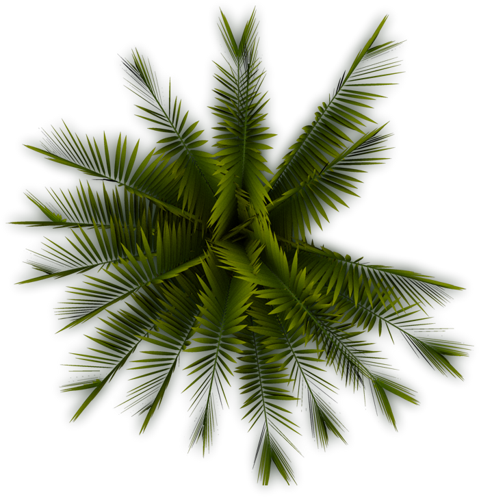 Palm tree plan view png. Top transparent pictures free