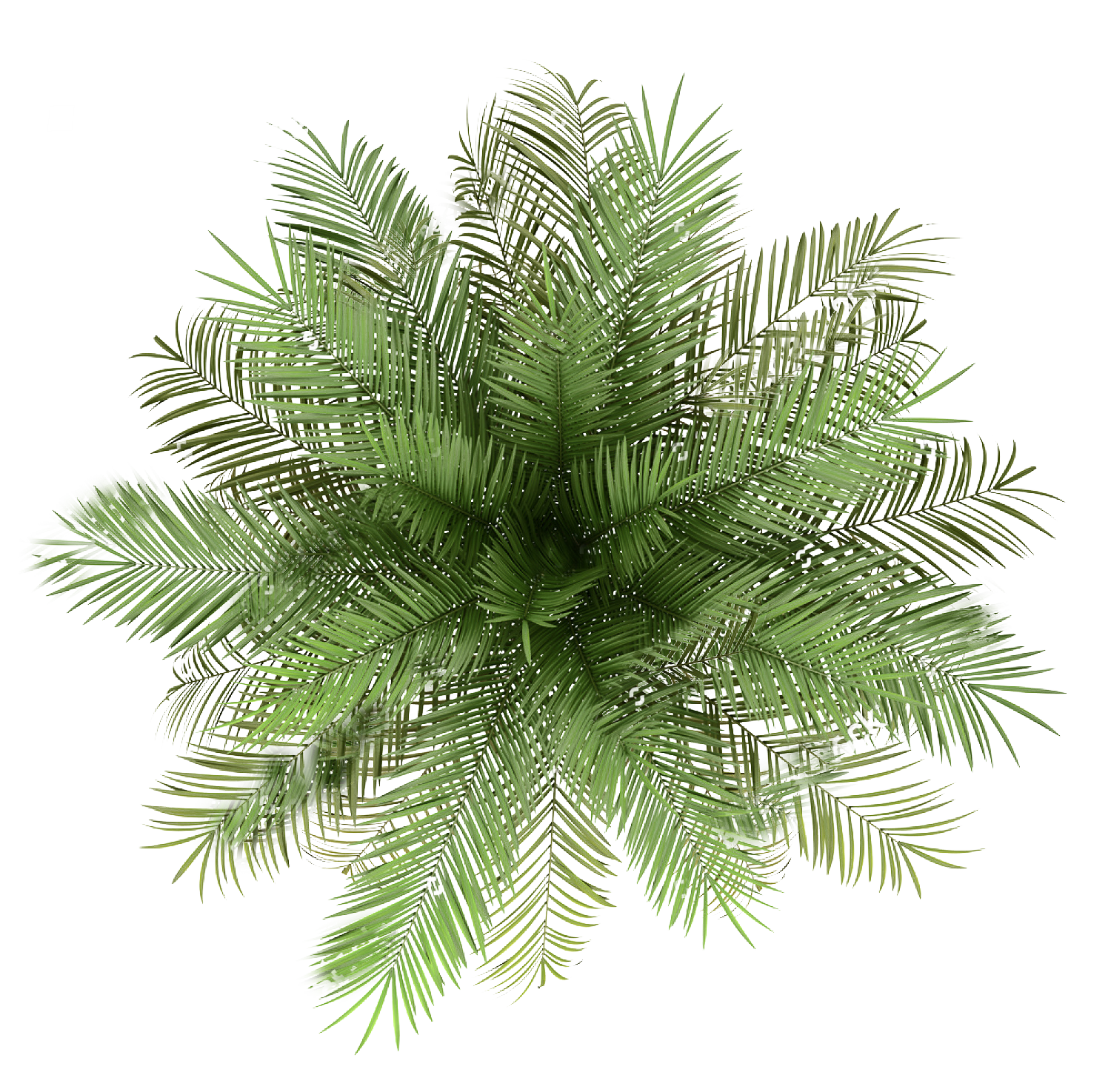 Palm tree top view png. Pin by elisa arteaga