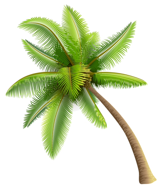 Coconut palm tree png. Green clipart planner happiness