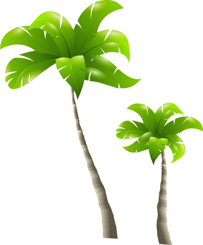 Small palm png. Tree image