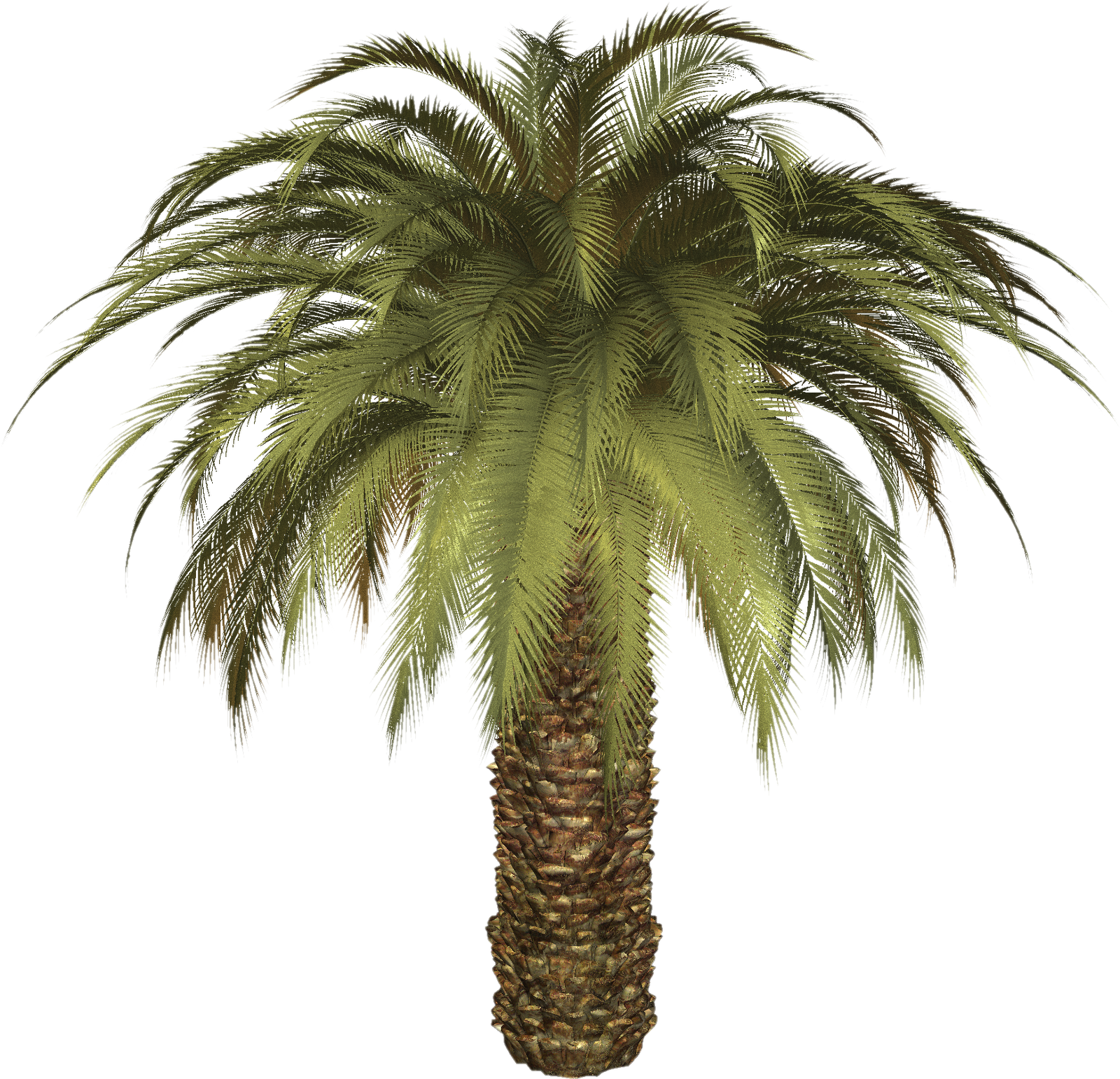 Birds eye view palm trees png. Tree images download free