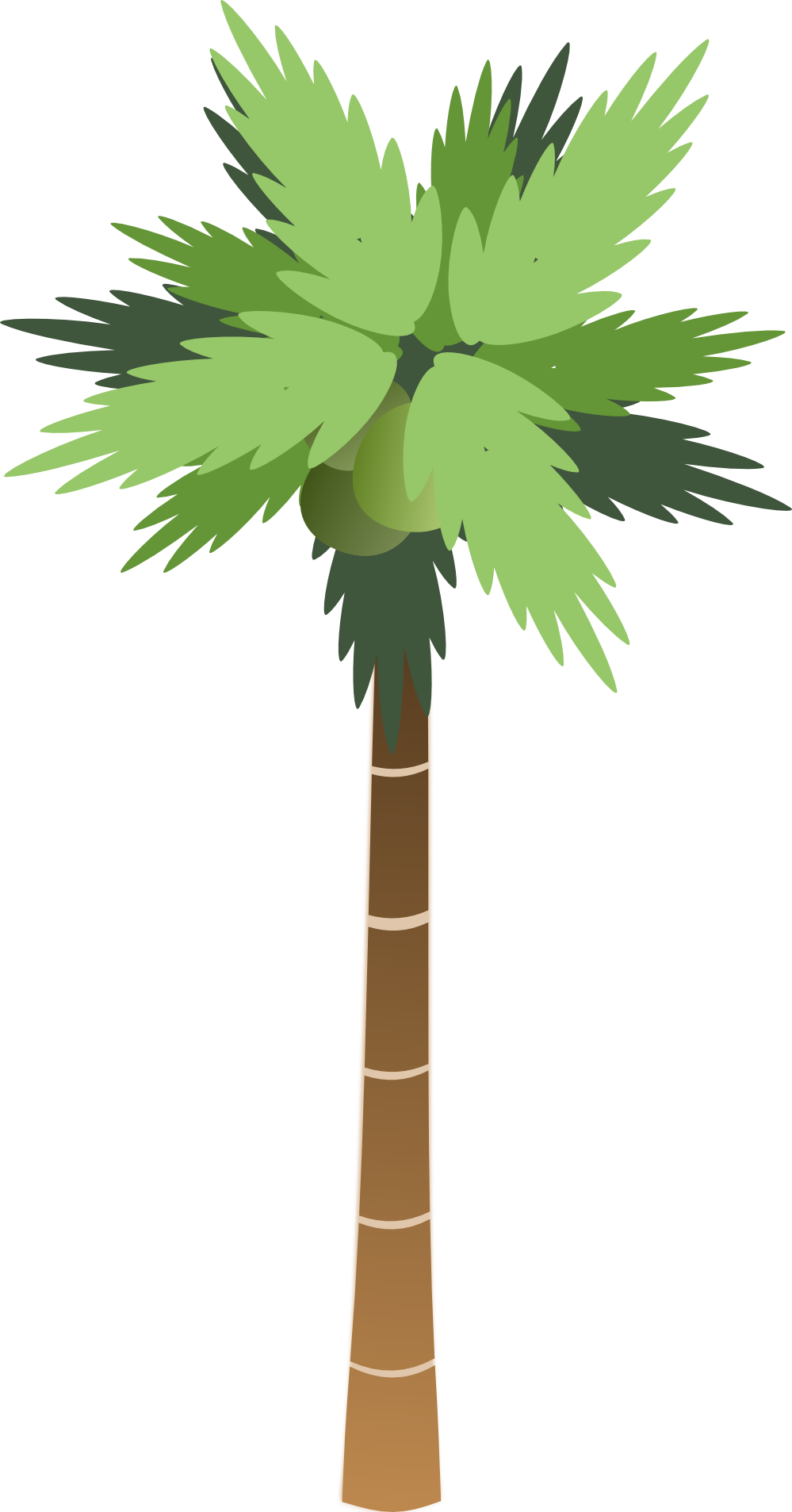 coconut clipart coconut bunch