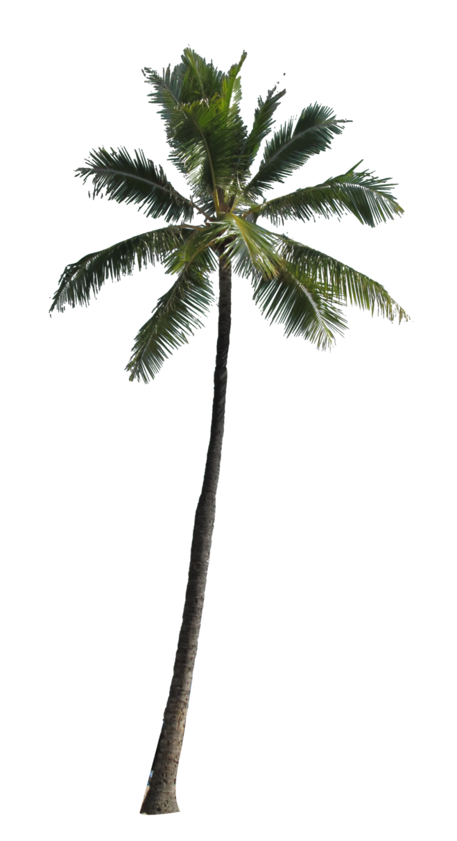Palm tree png free. Available in different size