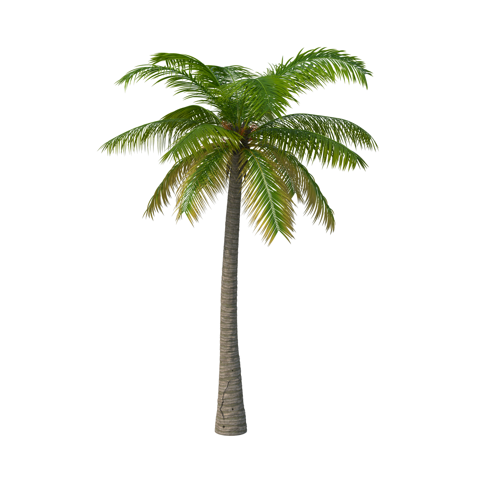 Palm tree png images. Image purepng free transparent