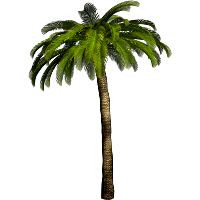 Palm tree .png. Download free png photo