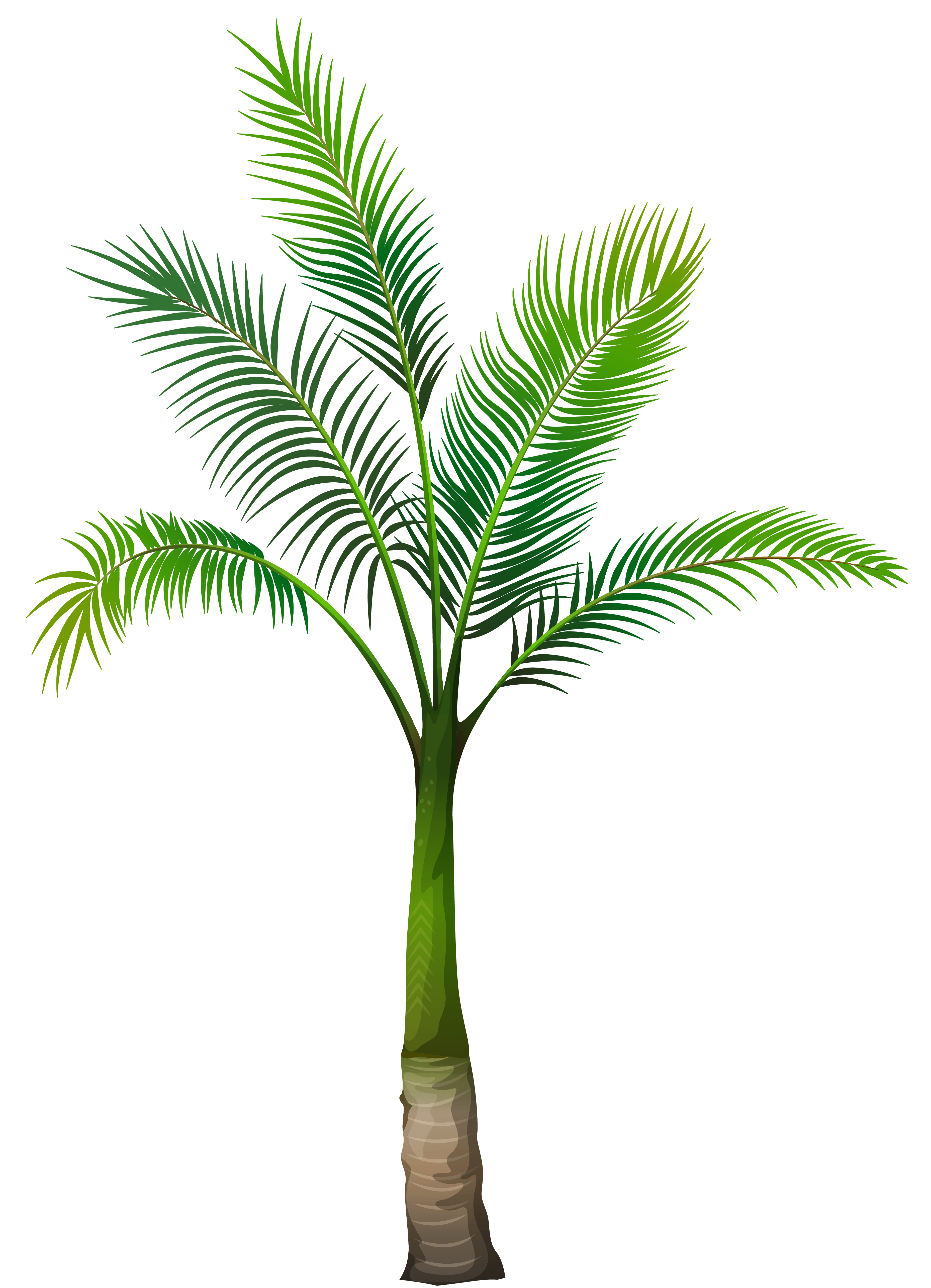 Palm tree png transparent. Image gallery yopriceville high