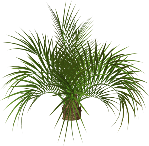 Palm tree png tumblr. Sticker fragileheartxxx