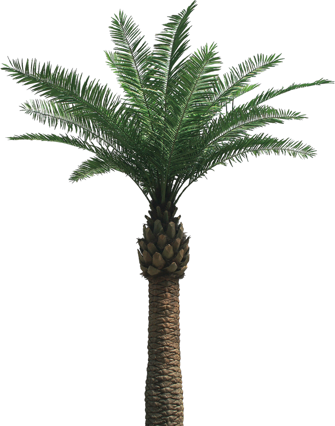 Palm tree .png. Clipart png file transparentpng
