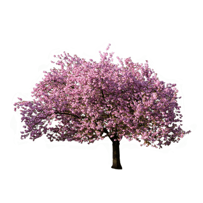 Palm tree top png. Transparent stickpng blossoming in