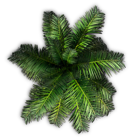 Palm tree top png. Index of mapping terrain