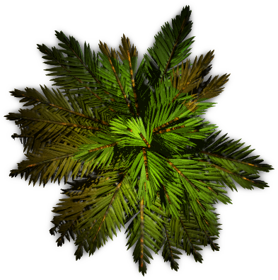 Palm tree top view png. Transparent pictures free icons