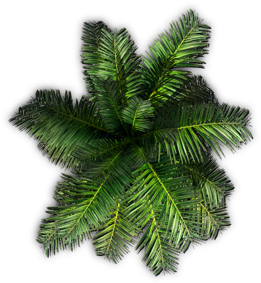 Palm tree top view png. Download hd k small