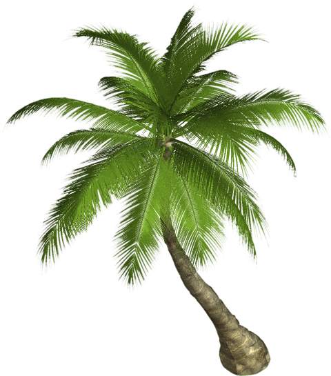 Palm tree top view png. Free images toppng transparent