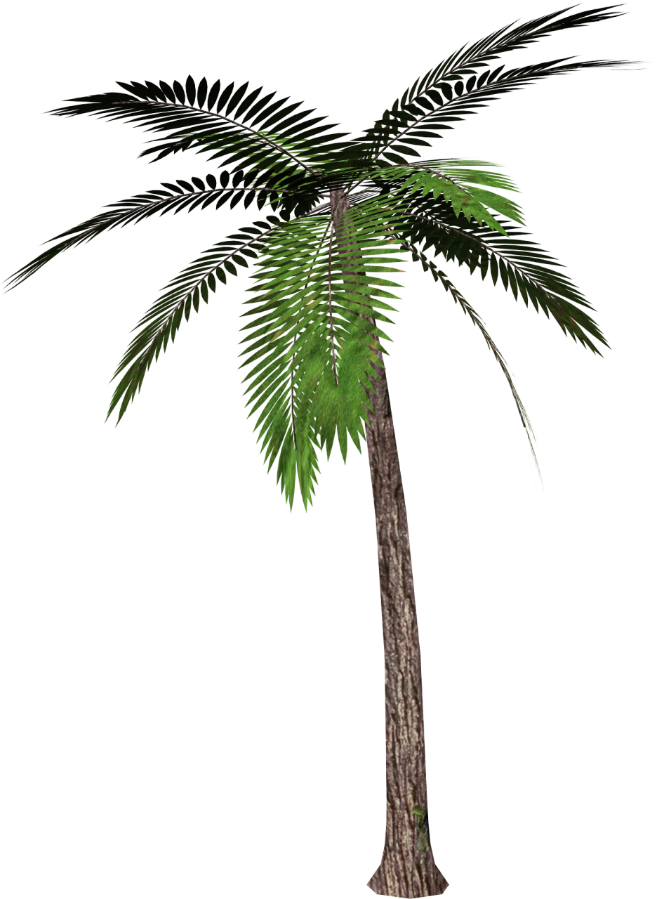 Palm tree transparent background png. Clipart gallery yopriceville high