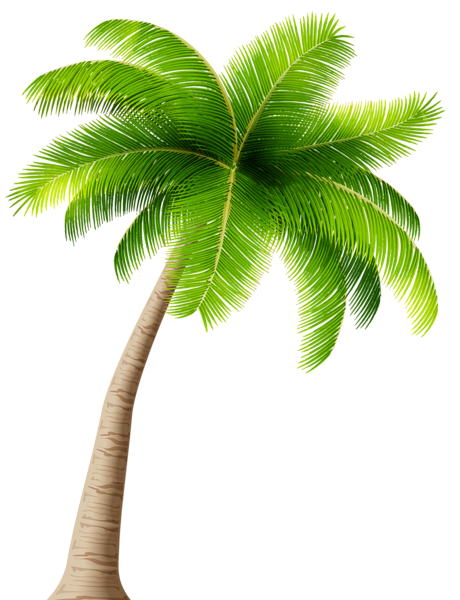 Real palm tree with christmas ornaments png free. Transparent image palms pinterest
