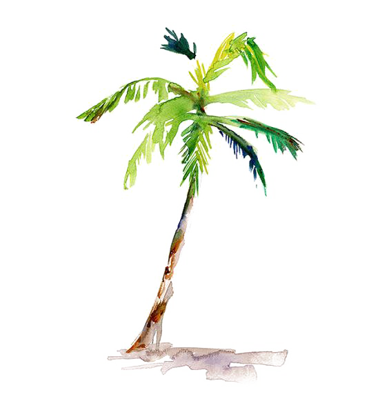 Palm tree watercolor png. Painting arecaceae drawing coconut