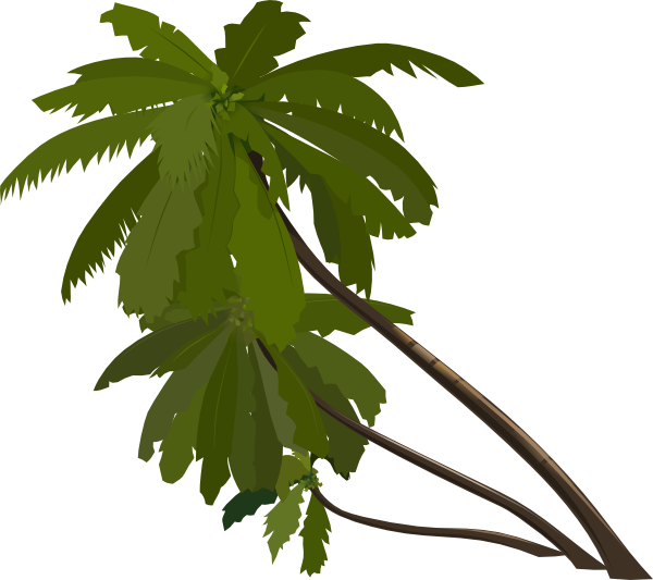 Real palm tree png. Three trees clip art
