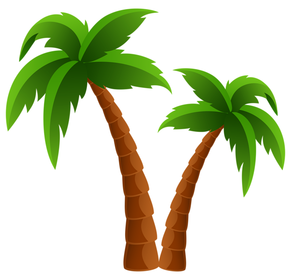 Palm tree drawing png. Two trees clipart image