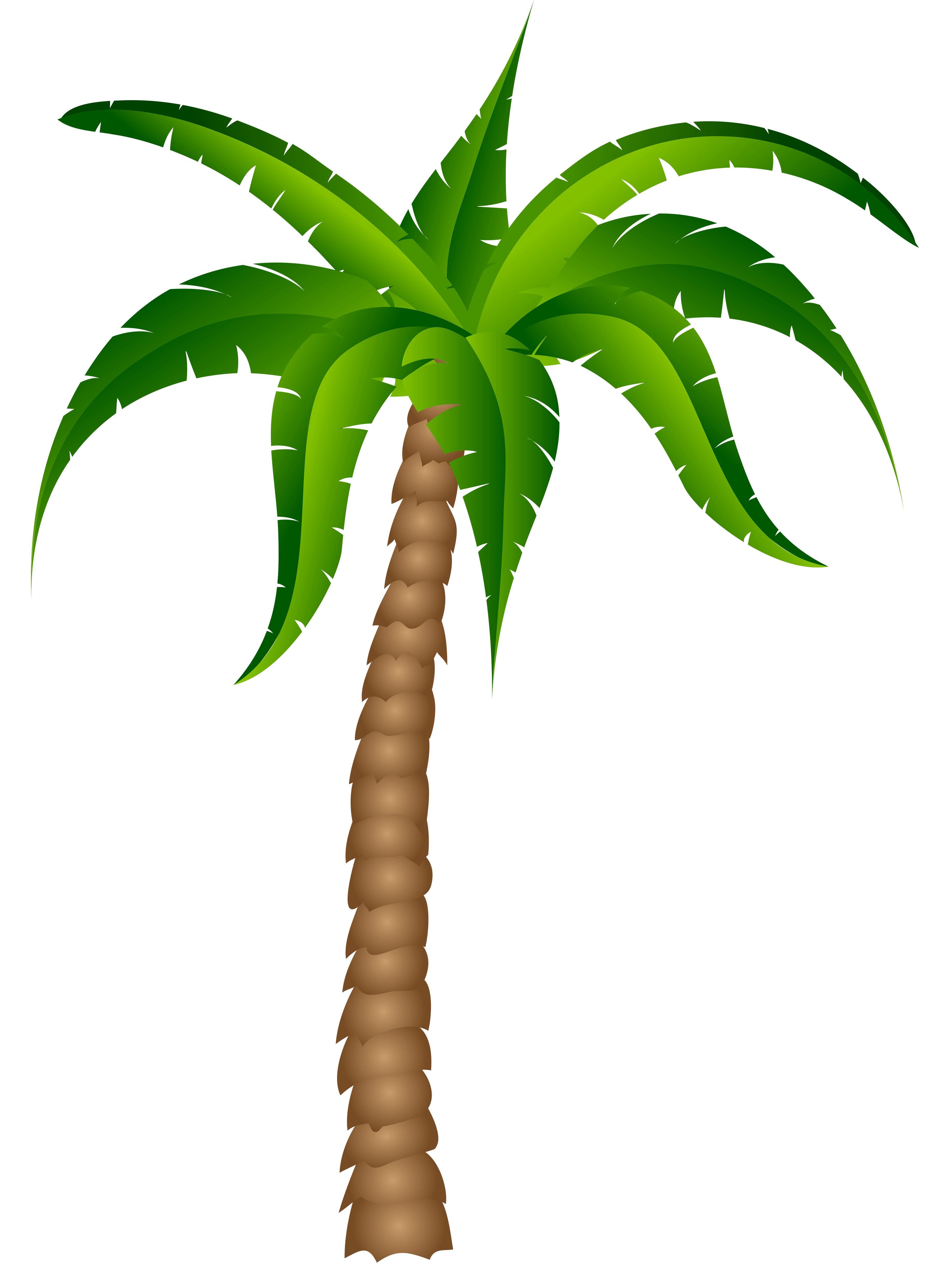 Palm tree transparent background png. Drawing at getdrawings com