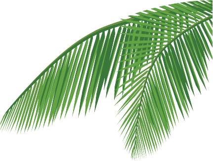 Palm trees leaves png. Icon daun download