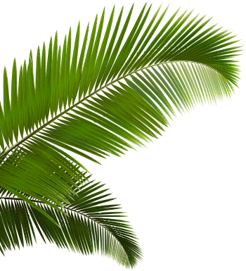 Palm fronds png. Left