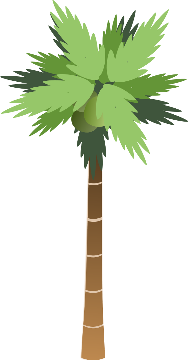 Coconuts vector coconut leave. Free palm tree download