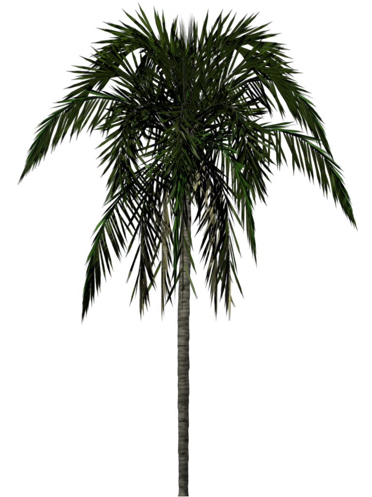 palm leaf texture png
