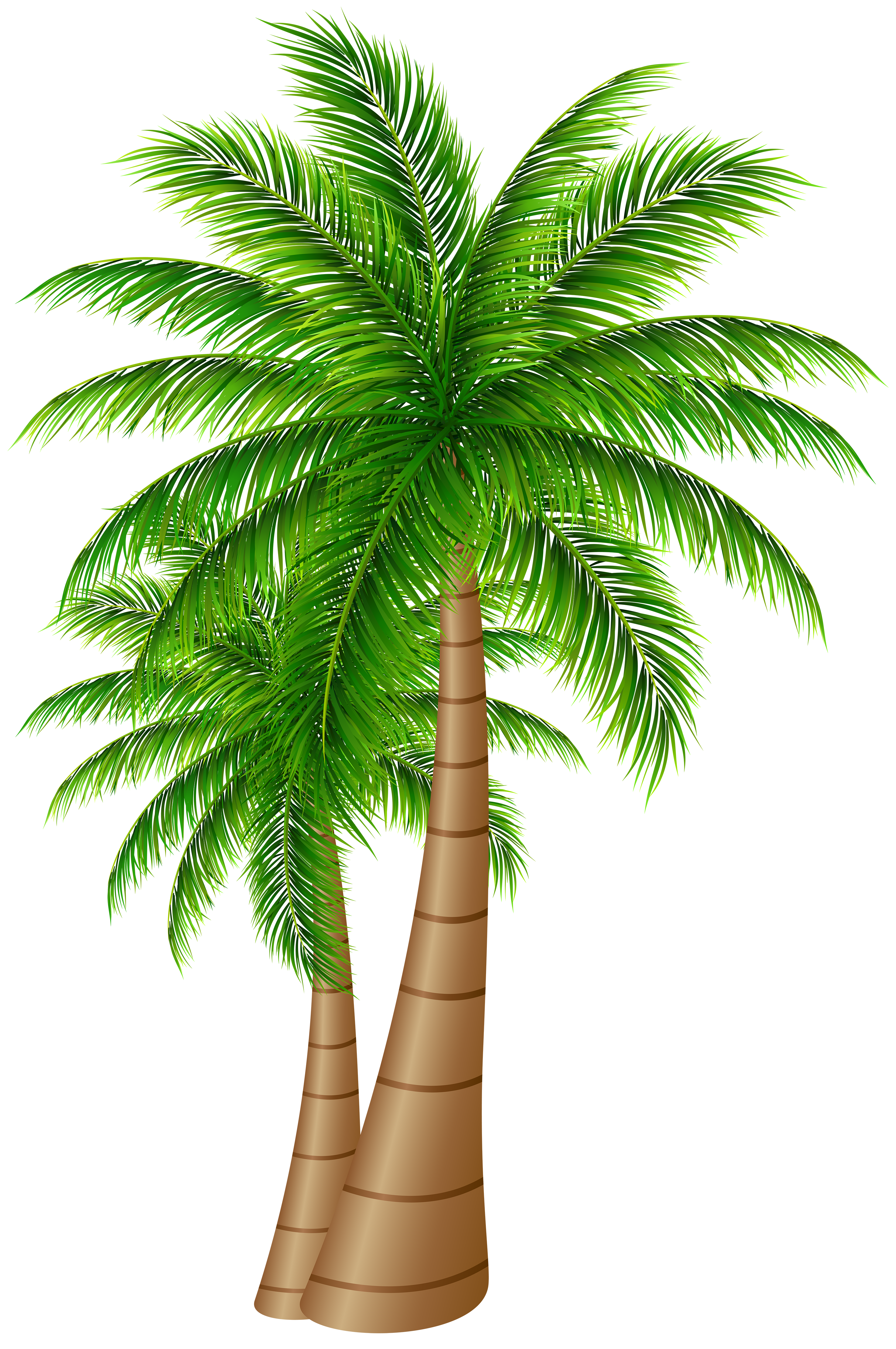 Date palm tree png. Trees large clip art