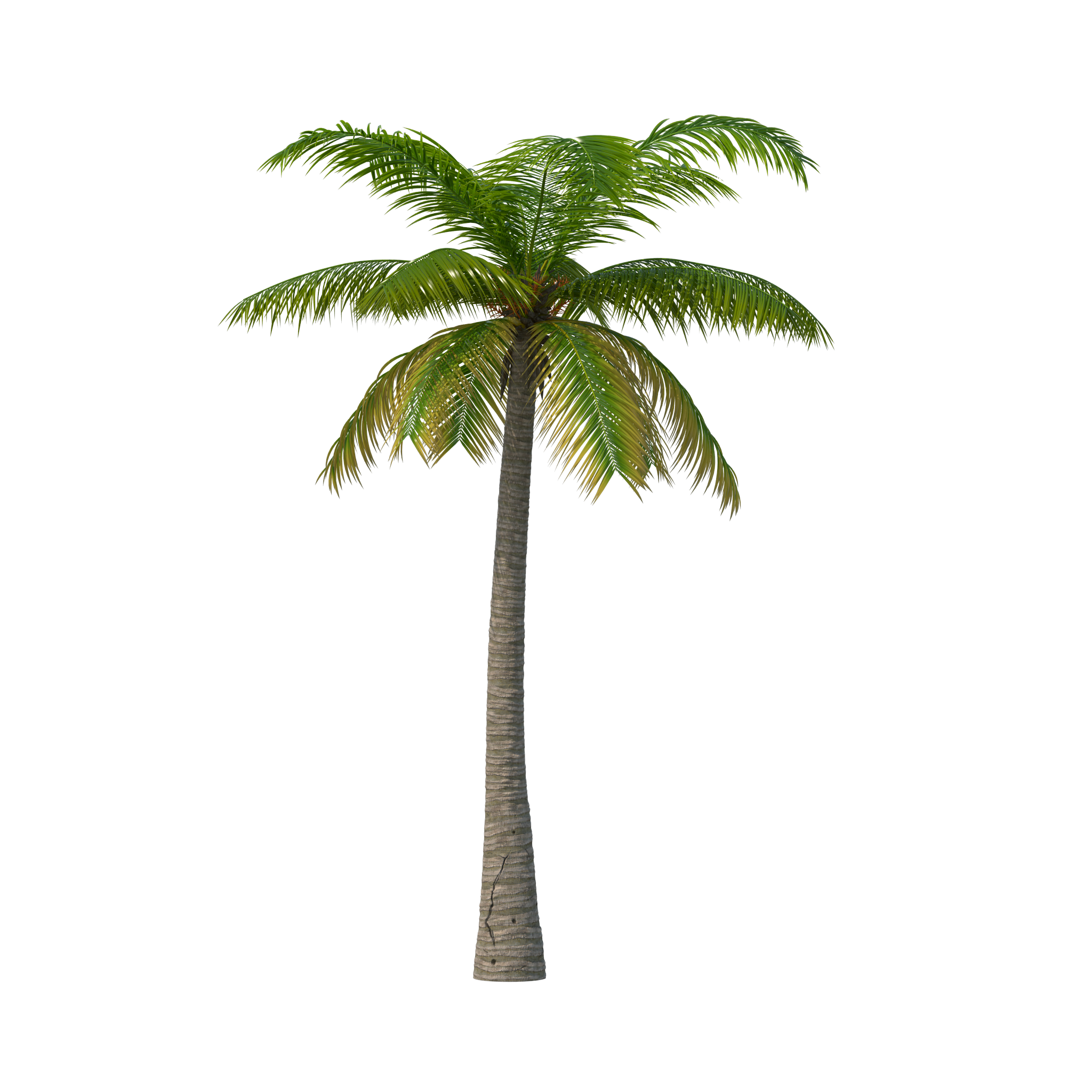 Palm trees png transparent. Tree image purepng free