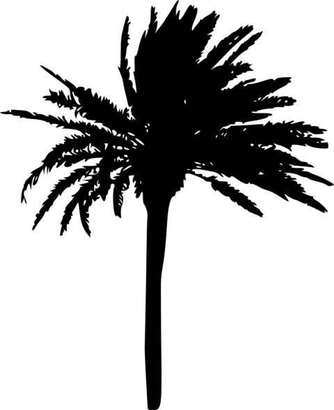 Palm trees silhouette png. Tree free images toppng