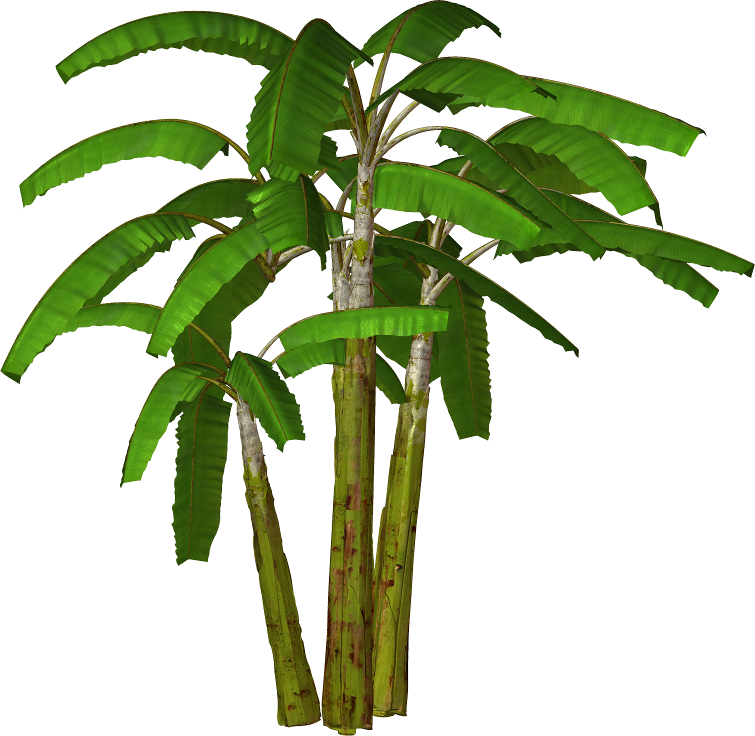 Palm trees tumblr png. Tree transparent pictures free
