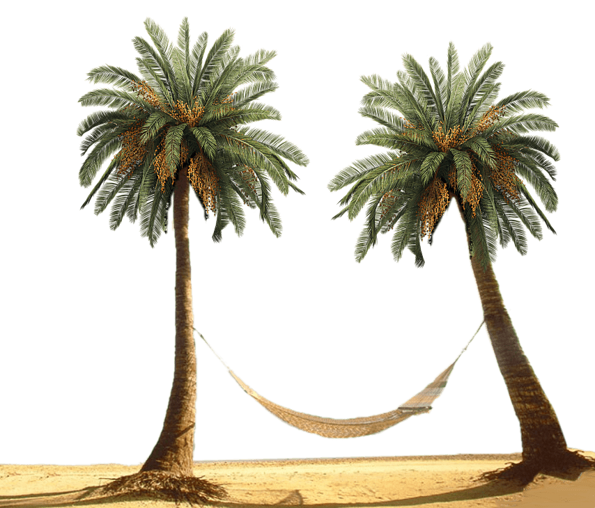 Palm trees tumblr png. Hammock between transparent stickpng